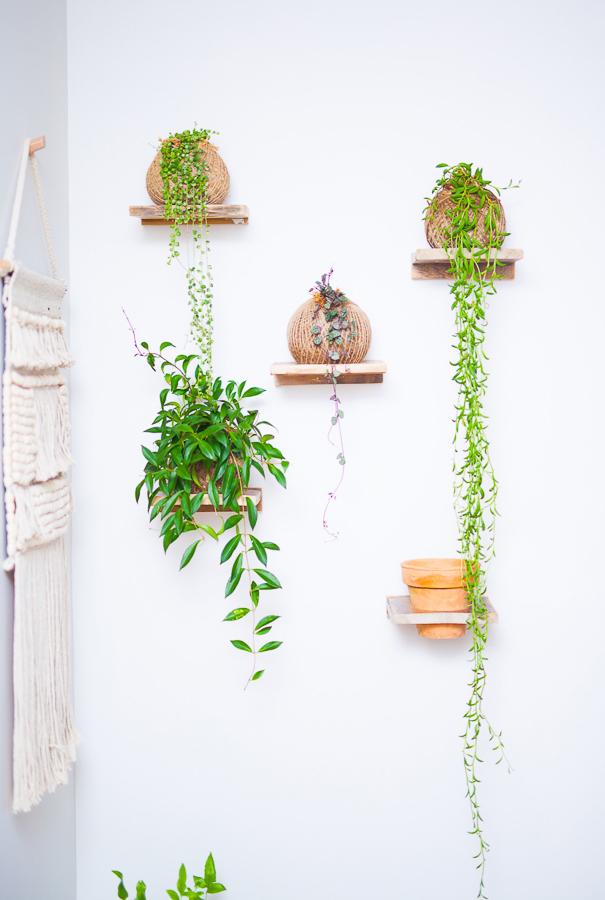 Wall Shelves, Homespun Succulents, Launceston Tasmania
